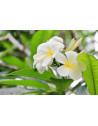 monoï-de-tahiti-100-ml-BIO-véritable-appelation-monoï-été-soleil