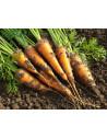 huile-carotte-france-bonne-mine-soleil-vitamine-pure-naturel-solaire-eclat-soins-peaux-terne-fatigue-vegan-bronzage