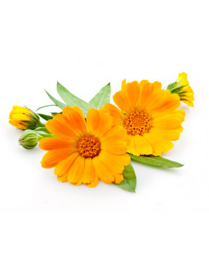 huile-calendula-bio-pur-naturel-francais-fleur-de-soucis-peaux-sensibles-brulures-coups-de-soleil