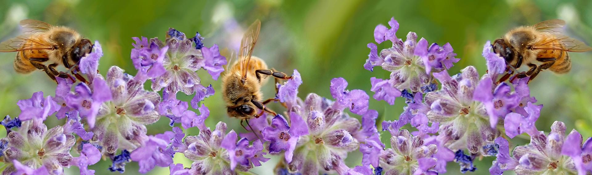 abeille-produits-bio.jpg